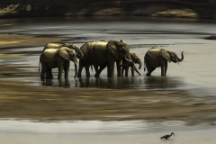 20x30 ZAMBIA RIVER ELEPHANTS
