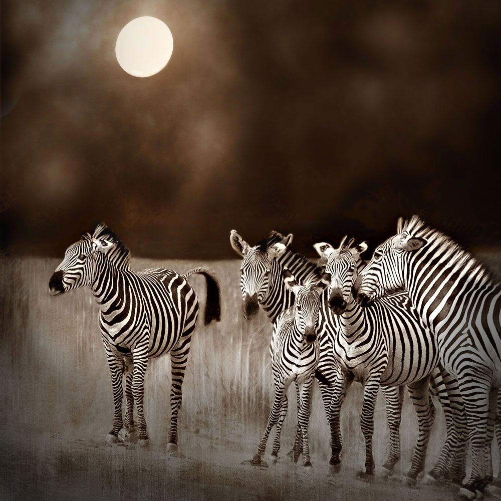 Moonlight in the Mara - Bobbie Goodrich © 2012