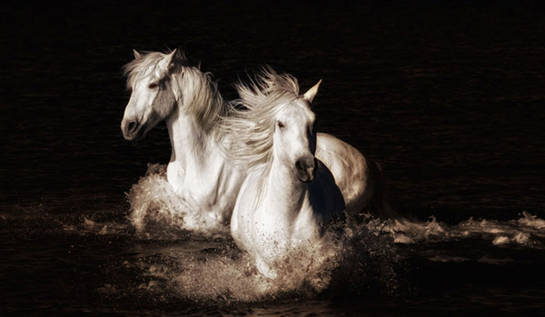 camargue-water-sports.jpg