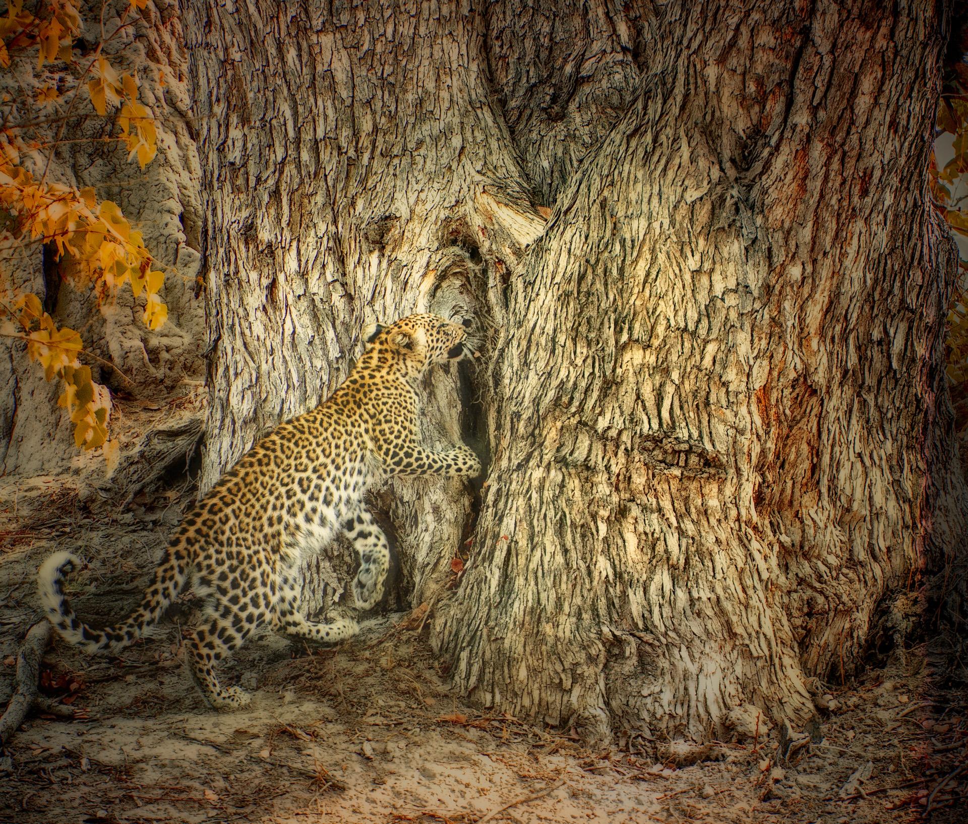 02 Leopard