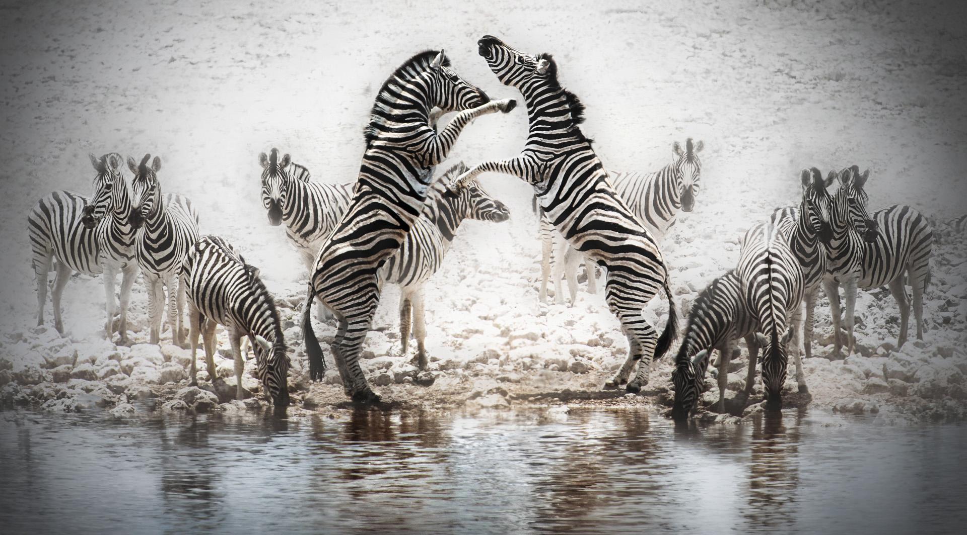10 Zebras Etosha