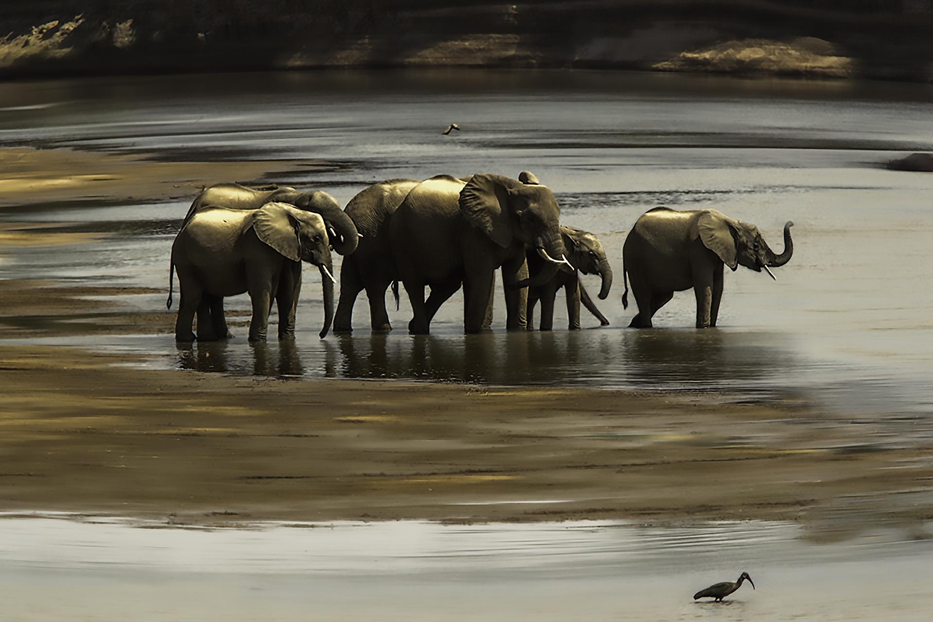 20x30 ZAMBIA RIVER ELEPHANTS