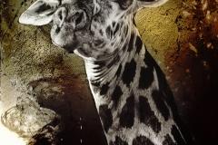 20x30 AFRICA GIRAFFEE