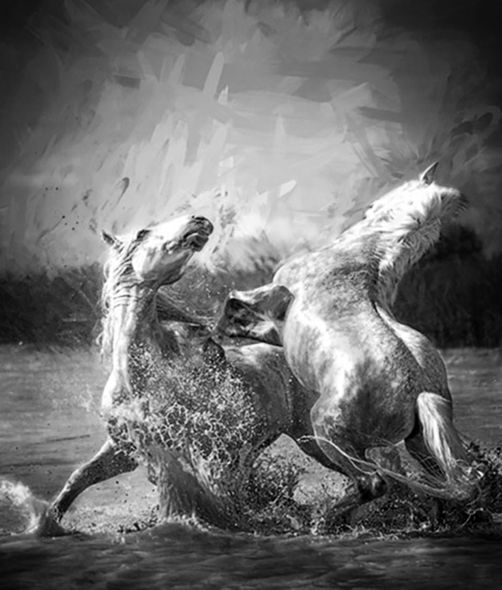 03 Camargue Stallion Encounter
