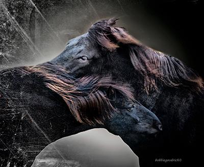 icelandic_black_horses.jpg