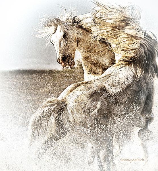 bobbie-goodrich-stallions.jpg