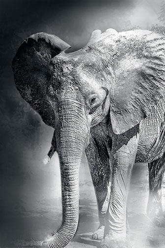 Dust Bath © Bobbie Goodrich 2013