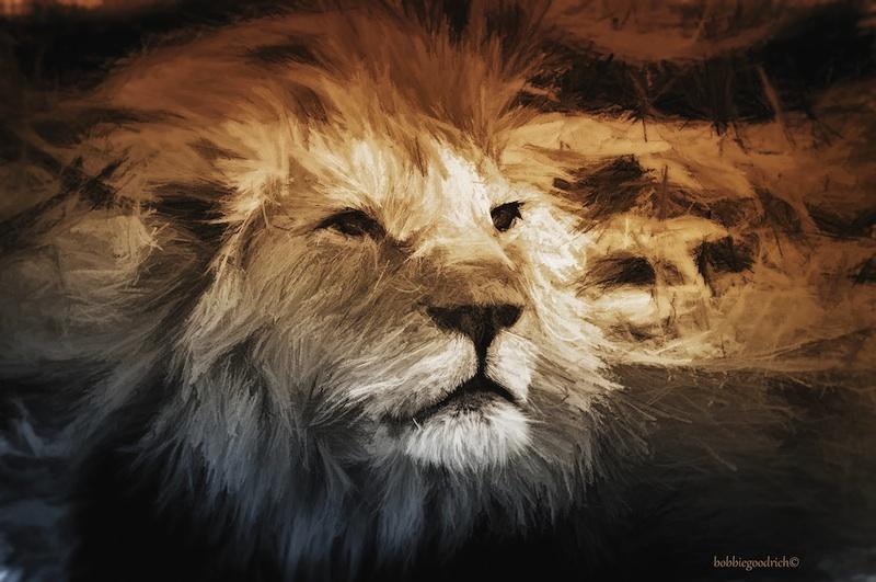 Lion, Namibia © Bobbie Goodrich 2014